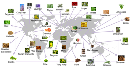 Pic-DoTerra-Map